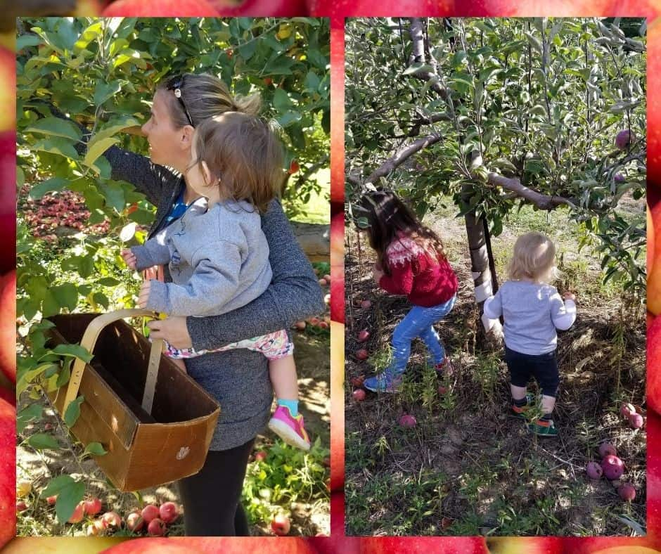 mom and preschoolers apple picking